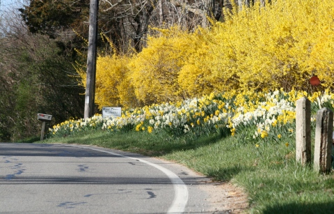 Spring Blooms Along a Country Road